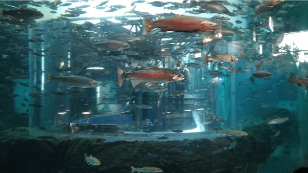 湧水の里水族館 イメージ