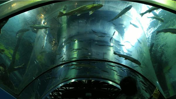 二重回遊水槽 内部