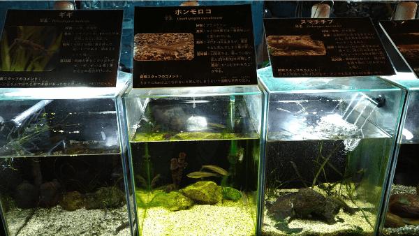 湧水の里水族館