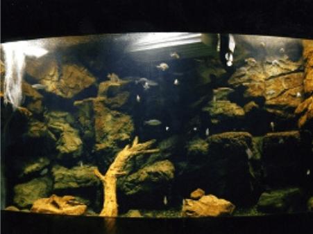 深みの魚水槽