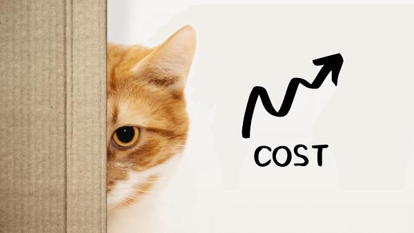 猫を飼う 費用