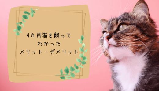 猫を飼ってみてわかったメリット、デメリット